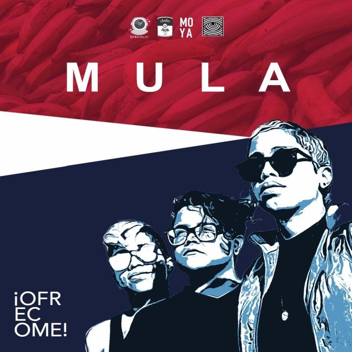 Ofrecome MULA IG WALL